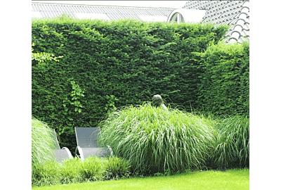 Die beliebtesten Heckenpflanzen der Deutschen