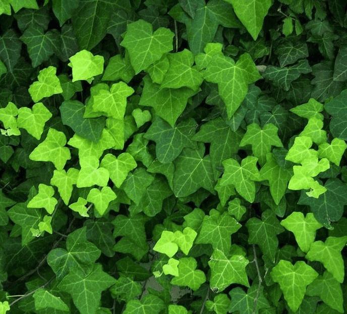 Sichtschutz pflanzen: So finden Sie die richtige Hecke für Ihren Garten