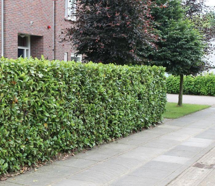 Ideen für einen natürlichen Sichtschutz im Garten