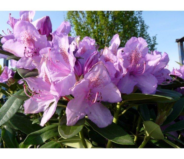 Die schönsten, blühenden Heckenpflanzen für Ihren Garten