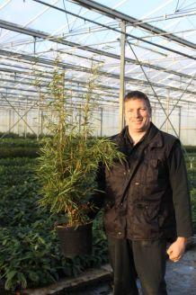 Bambus Topf 100-125 cm Topf