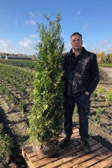 Lebensbaum 'Brabant' (175-200 cm) Extra Qualtität Wurzelballen
