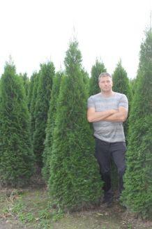 Lebensbaum 'Smaragd' Wurzelballen 200-225 cm Extra Qualtität Wurzelballen